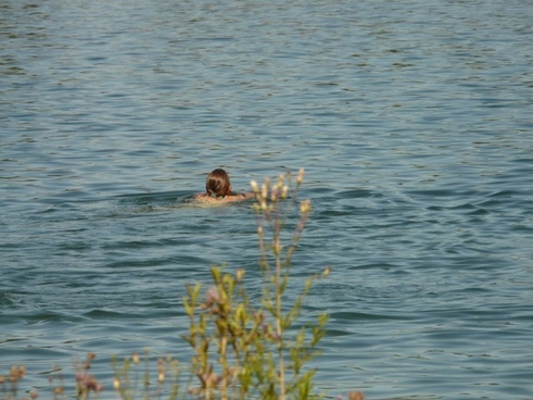 see swim swimmer