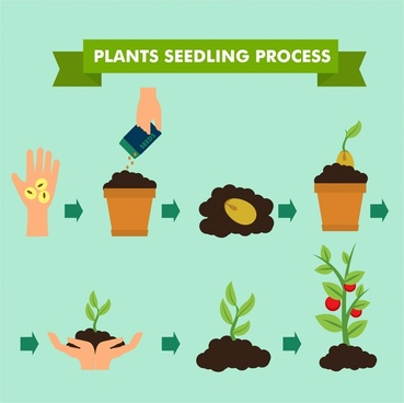 seedling process banner illustration with infographic style