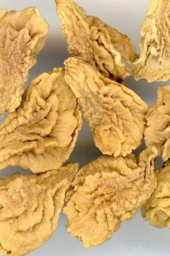 seeds angel trumpet brugmansia