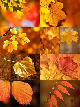 series 1 of the beautiful autumn leaves hd pictures