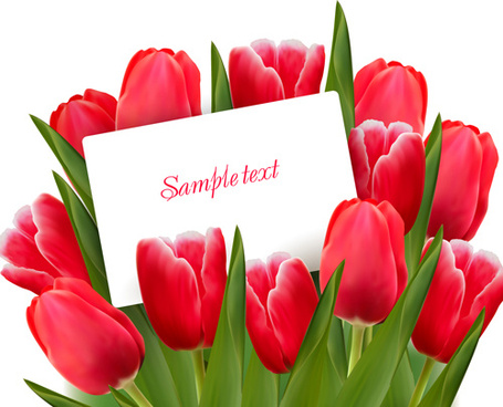 set of color tulips cards design vector