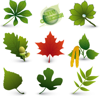 set of exquisite leaves vector graphics part