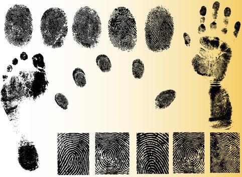 set of fingerprint identification vector