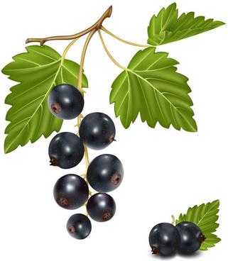 set of fresh berries vector