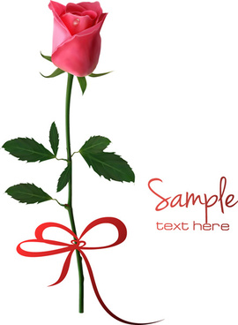 set of pretty rose elements vector