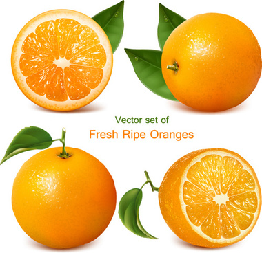 set of realistic fruit elements vector