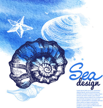 set of seashell hand drawn vectors