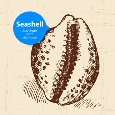 set of seashell hand drawn vectors
