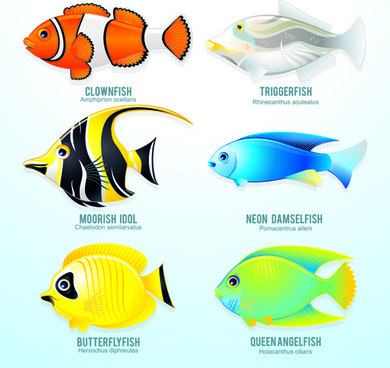 set of various fish vector