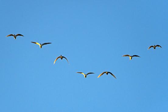 seven flying birds