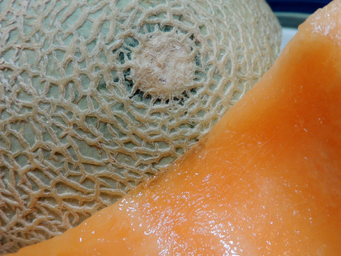 sh7 melon