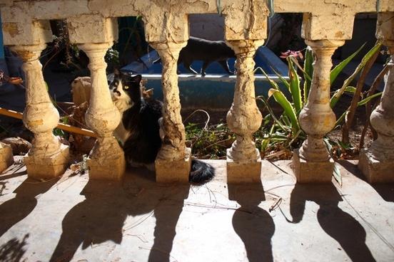 shadow columns old