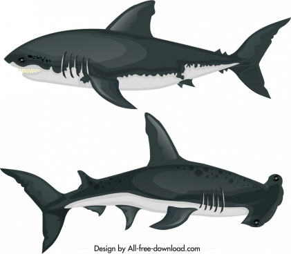 shark species icons colored cartoon sketch