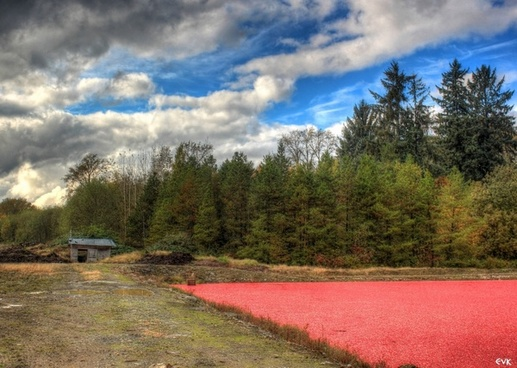 shed cranberries farmland