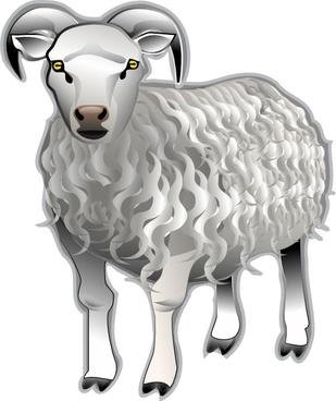 Sheep Md V clip art