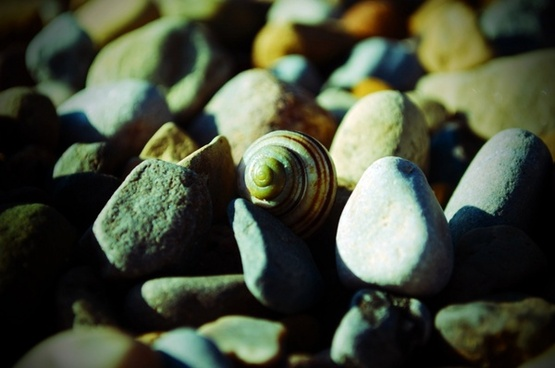 shell and stones