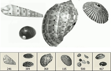 Shell Brushes