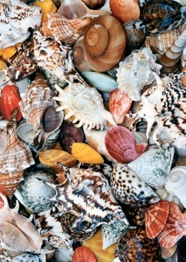 shell mussels colorful
