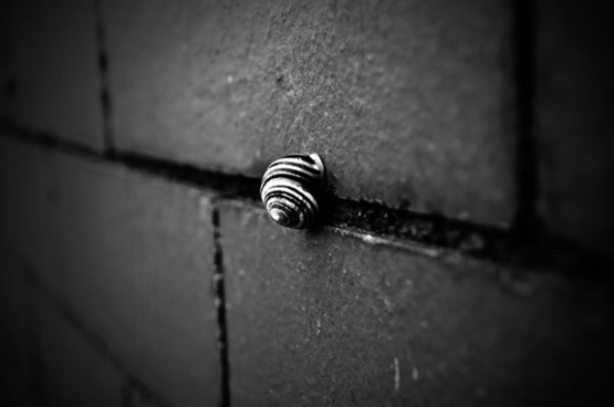shell on the wall