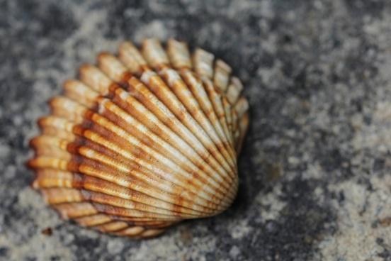 shell see sea