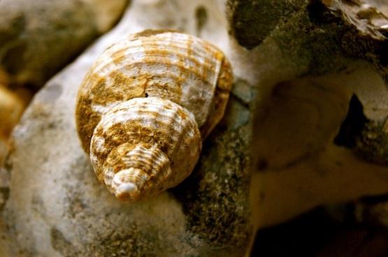 shell snail beach