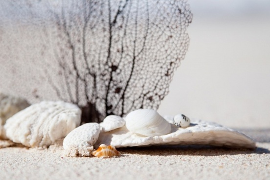 shells and corals on beach