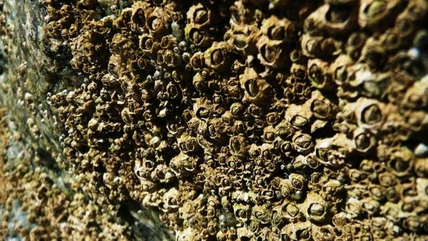 shells on a rock