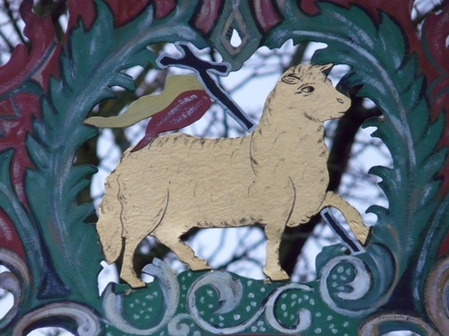 shield sheep lamb