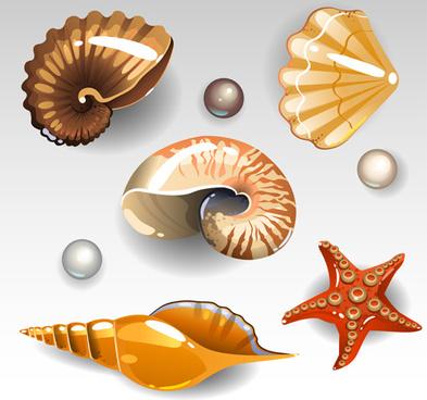 shining seashells design vector set