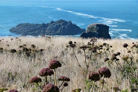 shoreline coast meadow