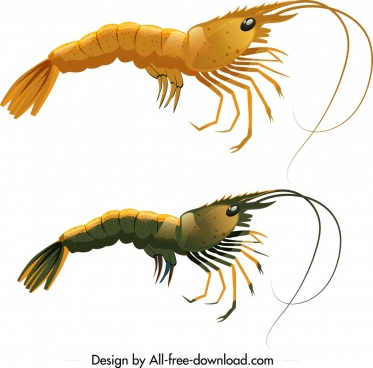 shrimp icons dark bright colored sketch