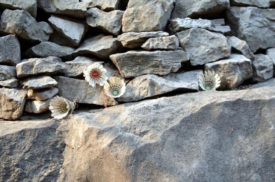 shuttlecocks on the rocks