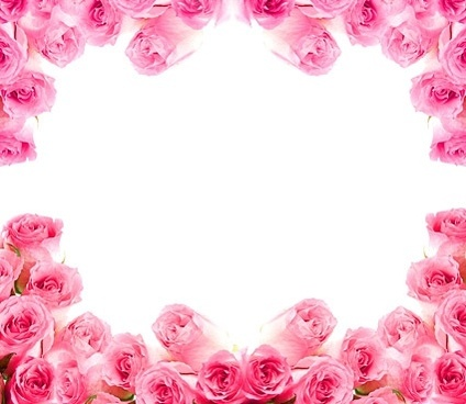 side of the pink roses picture