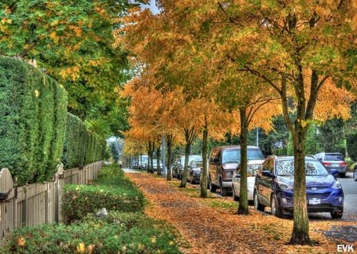 sidewalk nature leaves
