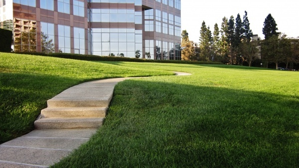 sidewalk street grass