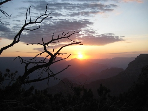 silhouette of bare branches against sunrise horizon