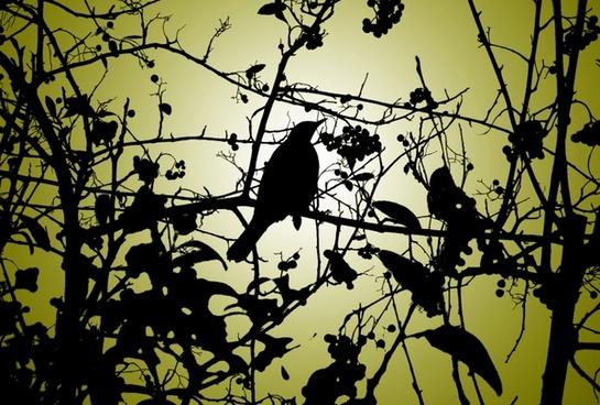 silhouette of the bird