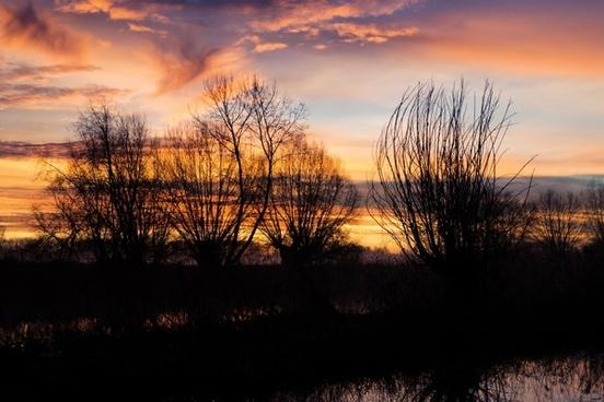 silhouette trees twilight