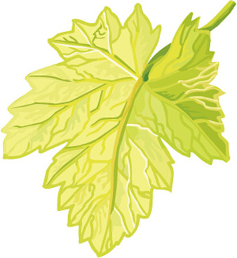 Grape Leaf Vector Free Vector Download 5 811 Free Vector For Commercial Use Format Ai Eps Cdr Svg Vector Illustration Graphic Art Design