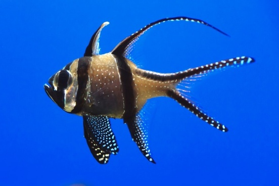 single fish in aquarium