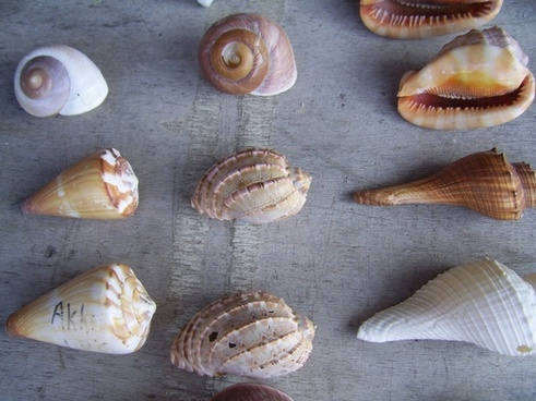 six sea shells