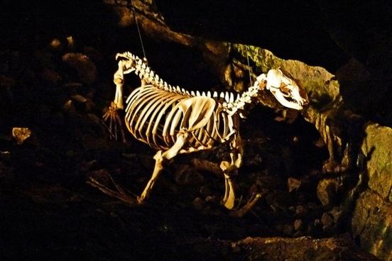 skeleton sea lion cave