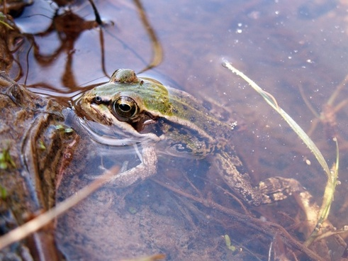 ski green frog water