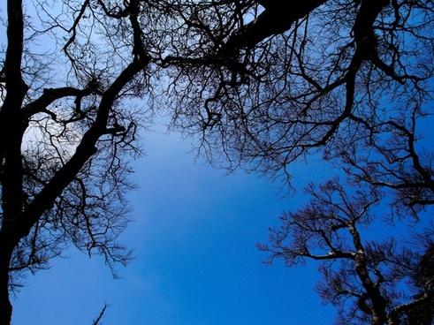sky blue wood