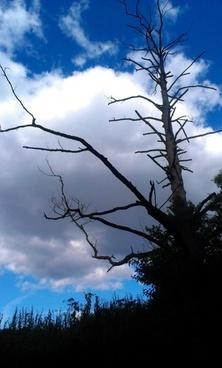 sky dead tree dead wood