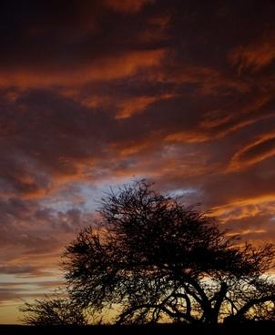sky evening twilight