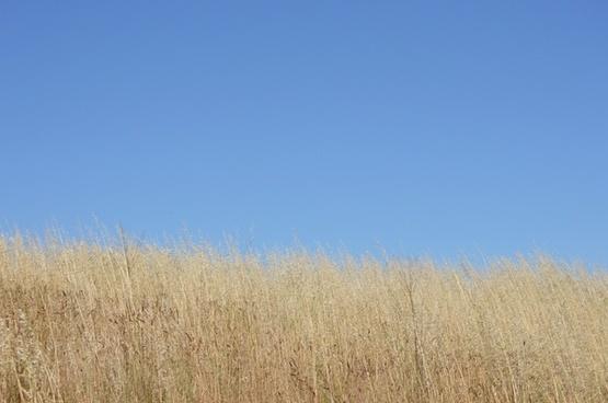 sky grass skyline
