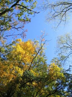 sky trees canopy