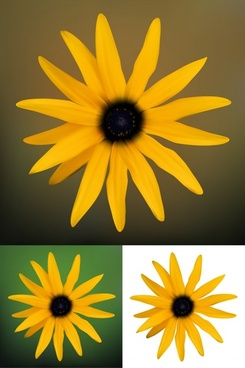 daisy petals background modern colored realistic closeup design