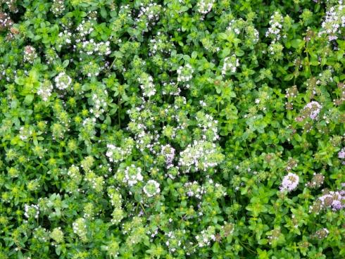 small flowers in garden